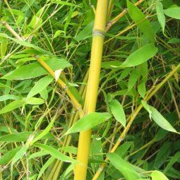 Mendip 100% bamboo